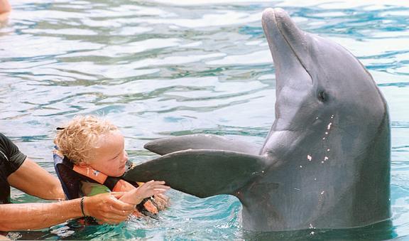 Lua de mel Cancun golfinho